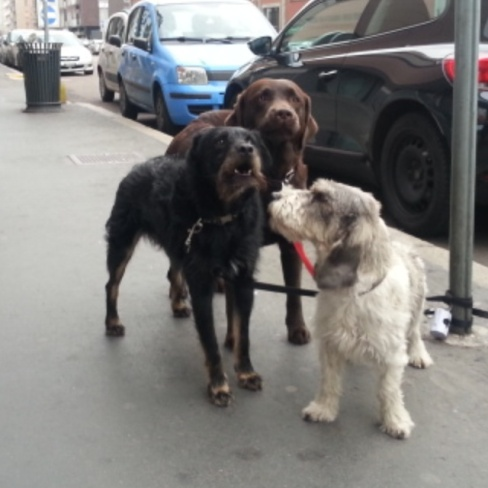 Gary & his friends, all rescue pups!