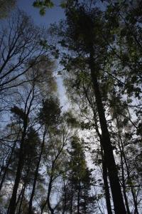 1-woods