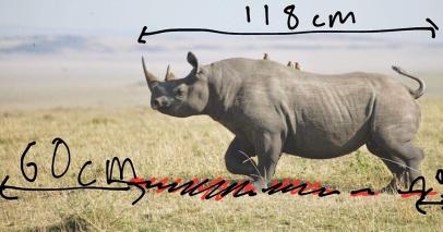 Measuring the Rhino